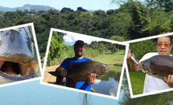 só peixão! pesca esportiva tambaqui, pacu e tilápia